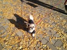 kalongさんのブログ-紅葉狩りにいってきまーす