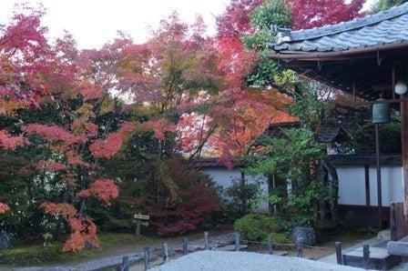 金福寺 紅葉