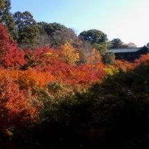 京都の紅葉2012