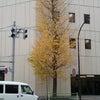 早くも散り始めた東京の銀杏の画像