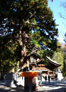 寝入りの杉と秋宮