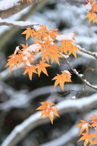 津軽半島の自然