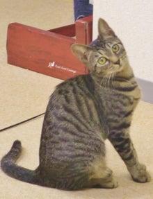 猫カフェ 浅草ねこ園ブログ