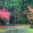☆高桐院の紅葉①☆