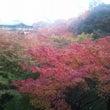 紅葉の京都