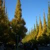 神宮外苑の銀杏並木を見てきましたの画像