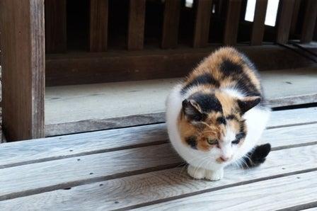 金福寺 三毛猫