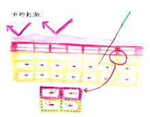 神戸スキンリボーン専門院  美容鍼 Jasmine