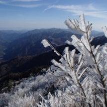 剣山、次郎笈の霧氷 …