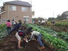 かもの子農園でボランティアしよう♪-落花生収穫04