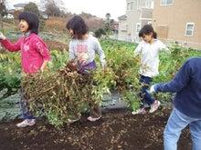 かもの子農園でボランティアしよう♪-落花生収穫01