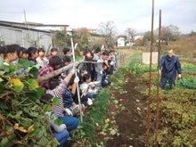 かもの子農園でボランティアしよう♪-落花生収穫05