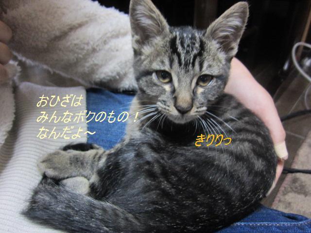 長崎保健所迷子犬リスト