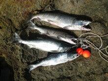 ☆極楽釣へと続く道☆-2012.11.16