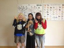 $犬のホリスティックケア*makana*横浜湘南(ドッグマッサージ・レイキ・フラワーレメディー)-image