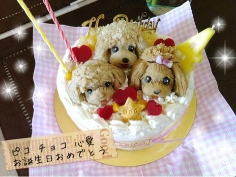 心愛(ココア)☆のブログ-image