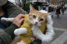 させぼのりんりんの猫さんブログ