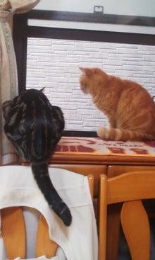 あまた猫♪
