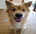 Save the Dogのブログ