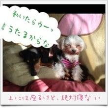 ぽんのブログ-image01.jpg