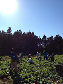 $あつの農業への道-image