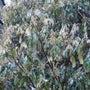 蝶の食樹、食草 ヤマ…
