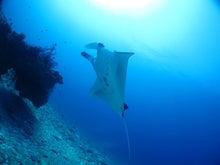 $沖縄ダイビング seafoxのブログ