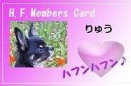 チワワの竜クン☆Stand by me