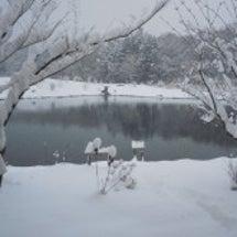 良く降る・・・雪