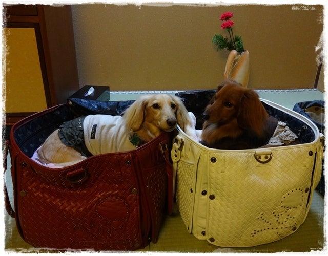旅犬Lani&Leaのほほん風船記-きくのや