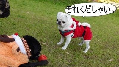 小梅と四松のブログ