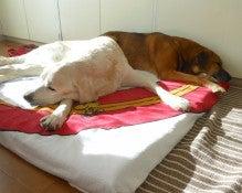 $老犬介護 ドッグヘルパー One by One-老犬介護 ドッグヘルパー ワンバイワン