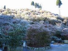 石川植物園のブログ