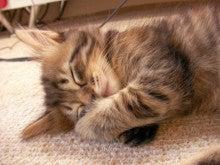 ようこそ 猫キャバ へ-くぅ 幼少期