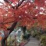 日本の紅葉100選