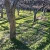 今日の畳〜収穫終了の画像