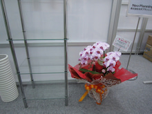 No-Planな社長のブログ -お花②