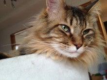 ようこそ 猫キャバ へ-くぅ
