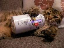 ようこそ 猫キャバ へ-サスケ