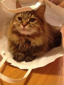 ようこそ 猫キャバ へ-ニコ
