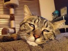 ようこそ 猫キャバ へ-ゴゴ