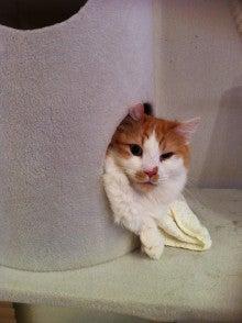 ようこそ 猫キャバ へ