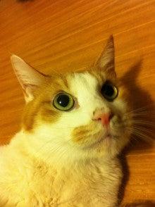 ようこそ 猫キャバ へ-いち