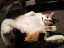 ようこそ 猫キャバ へ-ムッチ
