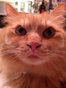 ようこそ 猫キャバ へ-おー