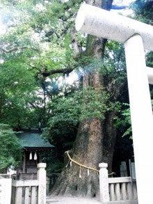 Suica割-2012無謀旅\イザナギ神社_夫婦大楠.JPG