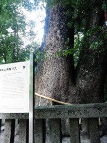 Suica割-2012無謀旅\イザナギ神社_夫婦大楠寄り.JPG