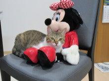 $ぐぅたら主婦と猫さんの日々