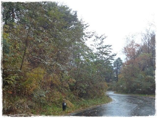 犬旅コンサルタントMiwaのブログ-玉響の風