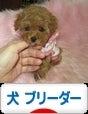 ☆~マナ&amp;amp;ル<br />ミdogハウスへようこそ♪☆沖縄で暮らすトイプードル・チワワ・ヨークシャーテリアのお家です。